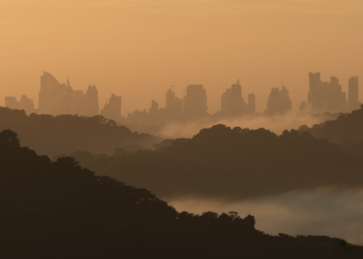 panama city, jungle, mist, morning