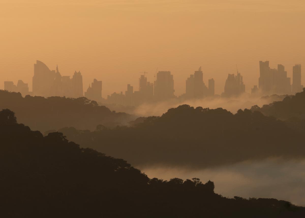 panama city, jungle, mist, morning