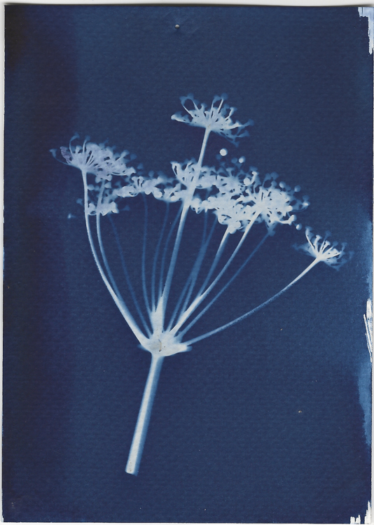 Print Making with Cyanotype