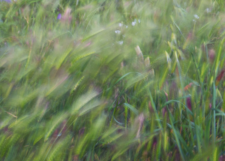blurs photography