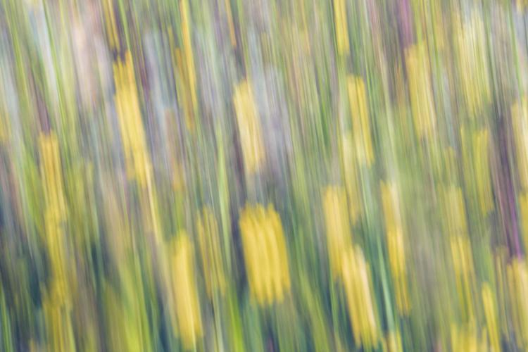 ICM blurs photography