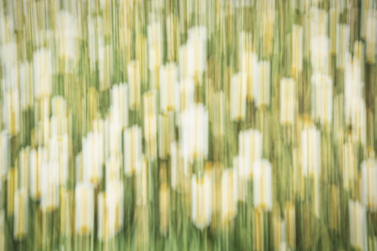 Unsharp wildflowers. Blurs photography