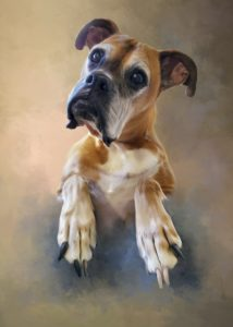 Pet Portraits for Spay and Neuter Donations.