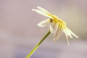 February Wildflowers