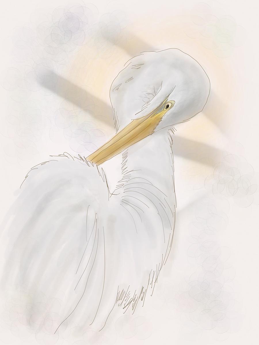 The Egret's Gift